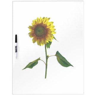 Zonnebloem die zich lang bevinden whiteboard
