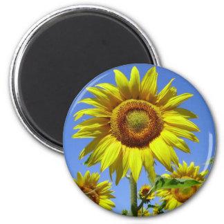 zonnebloem magneet