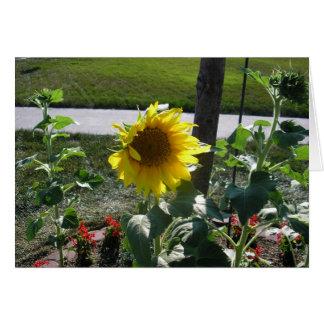 Zonnebloem op eind van de zomer briefkaarten 0