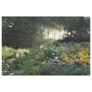 Zonnestralen in de Recente Tuinen van September Tissuepapier