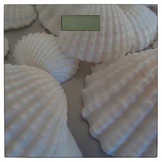 Zonnige Shells Exotisch Shell van het Zee van het Personenweegschaal