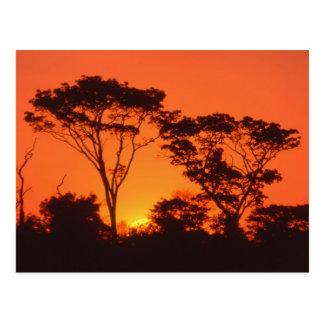 Zuid-Afrika.  Afrikaanse zonsondergang Briefkaart