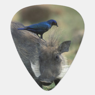 Zuid-Afrika, Pilanesburg gr., Wrattenzwijn Plectrum