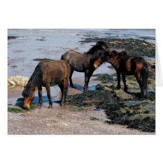 Zuiden Devon Drie Poneys Dartmoor op Ver Strand Kaart
