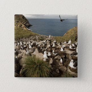 Zwart-browed Albatros, Thalassarche Vierkante Button 5,1 Cm
