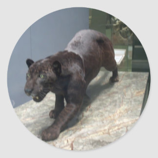 Zwart Jaguar (onca Panthera) Ronde Sticker