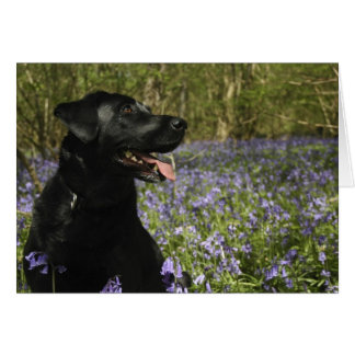 Zwart Labrador Briefkaarten 0