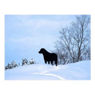 Zwart Labrador - de Weg van het Leven Briefkaart