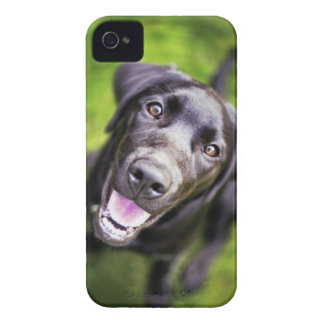 Zwart Labrador puppy die upwards, close-up kijken iPhone 4 Hoesje