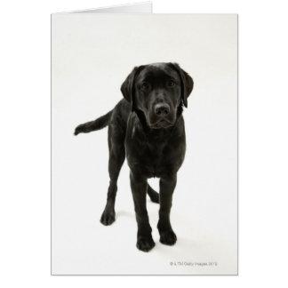 Zwart labrador retriever wenskaart