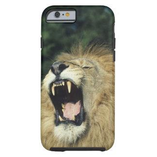 Zwart-maned mannelijke Afrikaanse leeuw die, Tough iPhone 6 Hoesje