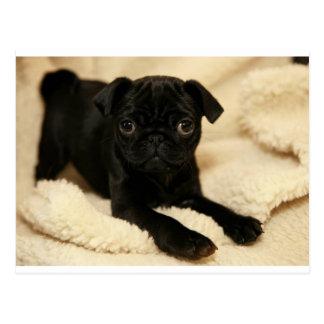 Zwart Pug Puppy Briefkaart