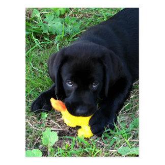 Zwart Puppy 1 van de Eend van Labrador Briefkaart