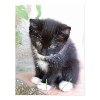Zwart-wit Katje Briefkaart