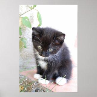 Zwart-wit Katje Poster