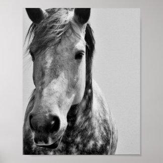 Zwart & Wit Paard Poster