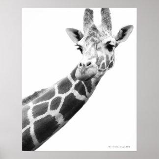Zwart-wit portret van een giraf poster