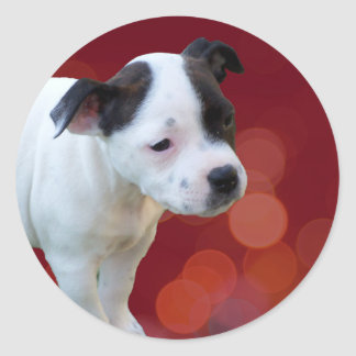 Zwart-wit staffordshire Bull terrier Puppy, Ronde Sticker