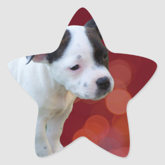 Zwart-wit staffordshire Bull terrier Puppy, Ster Sticker