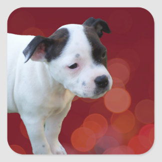 Zwart-wit staffordshire Bull terrier Puppy, Vierkante Sticker