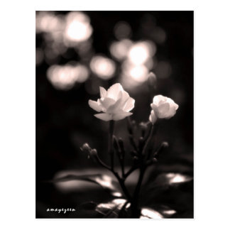 Zwart-witte bloem met bokeh briefkaart