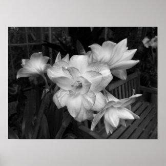 Zwart-witte BloemenFoto Poster
