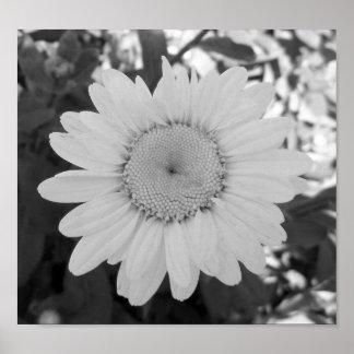 Zwart-witte Daisy Photograph Poster