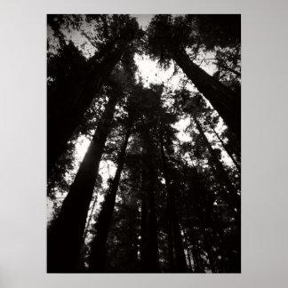 Zwart-witte het Park van de Staat van de Californi Poster