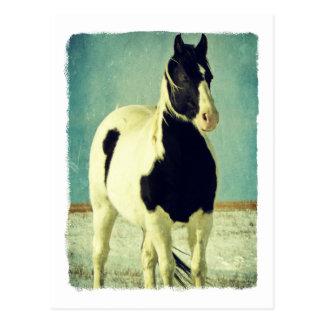 Zwart-witte Pinto Briefkaart