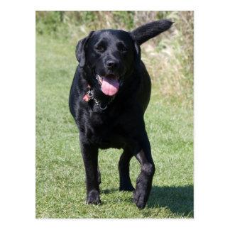 Zwarte de hond mooie foto van de labrador briefkaart
