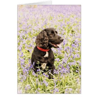 Zwarte hond in klokjes kaart