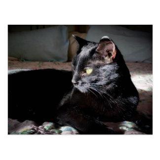 Zwarte kat op een bedbriefkaart briefkaart