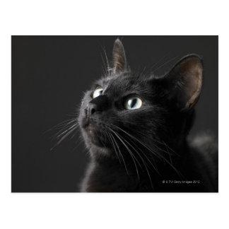 Zwarte kat tegen zwarte achtergrond, close-up briefkaart