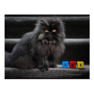 Zwarte kattenzitting op treden door bouwstenen briefkaart
