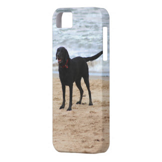 Zwarte Labrador Barely There iPhone 5 Hoesje