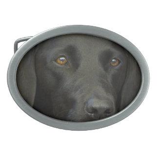 Zwarte Labrador Gespen