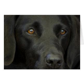 Zwarte Labrador Kaart
