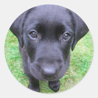 Zwarte Labrador op Gras Ronde Sticker