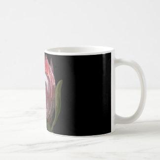 Zwarte Mok Protea