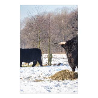 Zwarte Schotse Hooglanders in de wintersneeuw Briefpapier