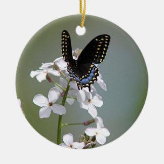 Zwarte swallowtailvlinder rond keramisch ornament