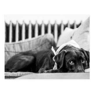 Zwarte & Witte Hond die het Slaperige Laboratorium Briefkaart