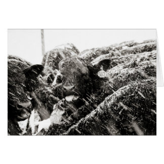 Zwarte & Witte Koe die het Begroeten van Kaart