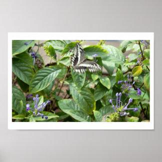 Zwarte Witte Vlinder op Plant Poster