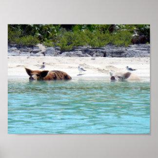 Zwemmende Varkens in het Poster van het Strand